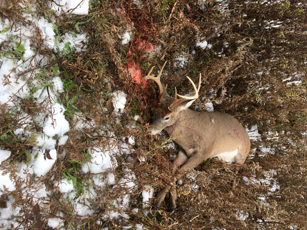 8 Pointer Harvested by Bob with 41 Mag and 240gr GT LSWC bullet